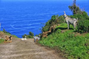 Die Insel La Palma